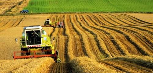 Türkiye'nin Ekonomik Coğrafyası: Tarım