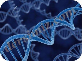 DNA Molekülünün Yapısı