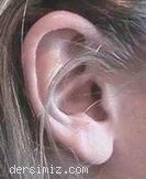 Duyu Organlarımız : Kulak