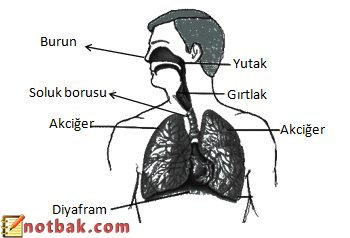 Solunum Sistemi ve Sağlığı-4.Sınıf